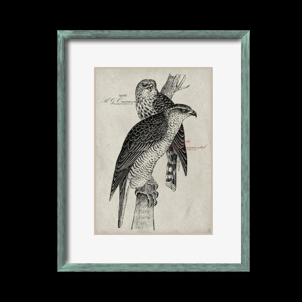 Two Perched Falcons Sketch Hand Drawn Original Unique Print