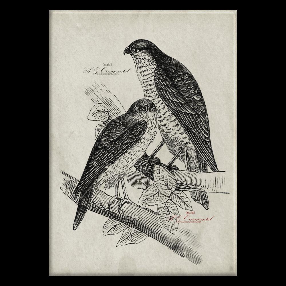 Two Perched Falcons Hand Drawn Pencil Sketch Original Unique Print